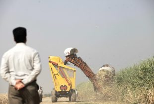کاهش ۲۵ درصدی تولید شکر در شرکت توسعه نیشکر خوزستان/کارشناسان: ۲۵درصد خوش بینانه است