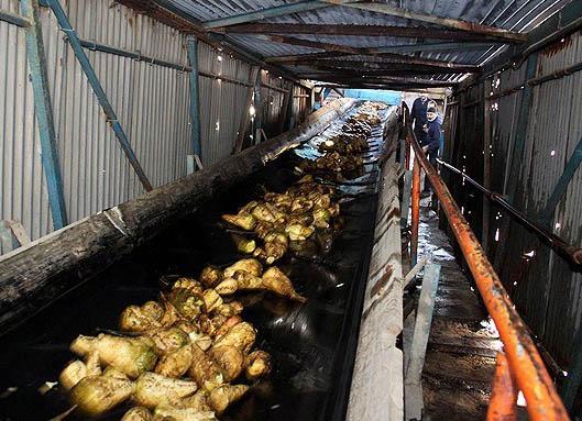 تاسیس 8 کارخانه در خوزستان برای خودکفایی شکر ضروری است