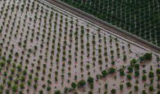 ۳۶۰میلیارد ریال غرامت به کشاورزان سیل زده خوزستانی پرداخت شد