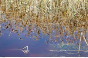 کاهش ۸۰۰ هزار تنی تولید گندم در خوزستان در اثر سیل
