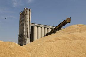 بیش از ۱۰۰هزار تن گندم به نرخ تضمینی در خوزستان خریداری شد
