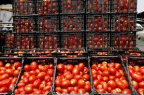 گرانی گوجه فرنگی | قیمت تا ۱۰ برابر افزایش یافته است