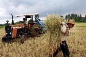 واردات گندم | منابع ارزی صرف حمایت از کشاورز خارجی میشود