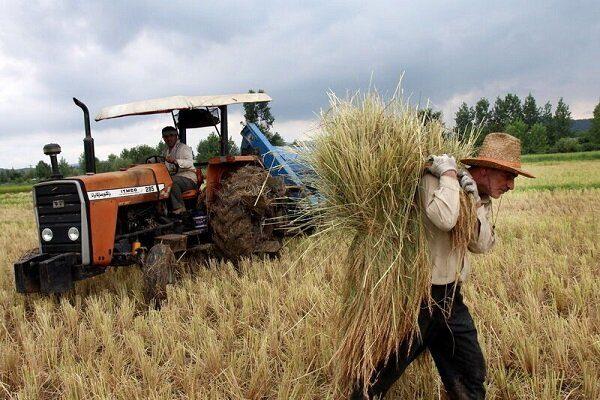 آخرین وضعیت خرید گندم و پرداخت به کشاورزان در خوزستان
